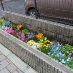 鮫洲大山線 歩道の花壇