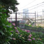 飛鳥の小径 あじさい 湘南新宿ライン